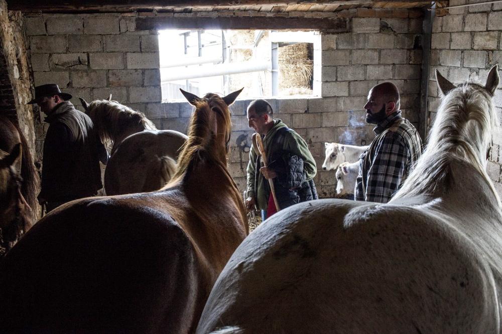 San Marco in Lamis (prov.Foggia: i pastori preparano i cavalli per partire.